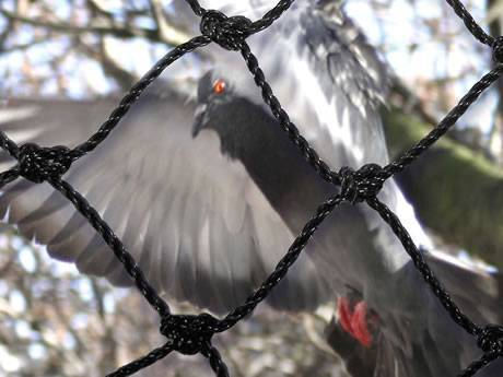 Strong knotted bird netting with square mesh for pigeons.